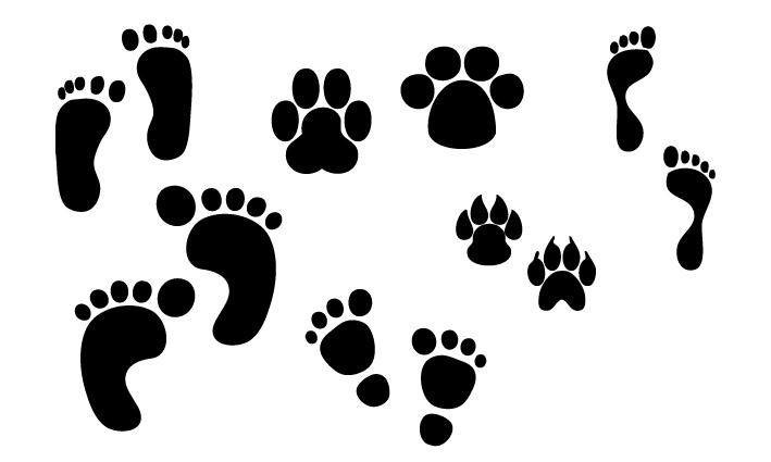 orme-e-impronte-footsteps-and-footprints